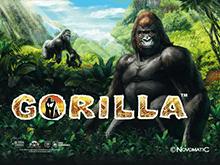 Скачать автомат Gorilla онлайн